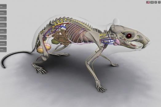 Programa de anatomia 3D criado no Brasil promete acabar com a morte de animais em sala de aula